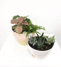 Robert Gordon Planter. Plants. Ferns. Miniature Garden. Gift. Plant Gift